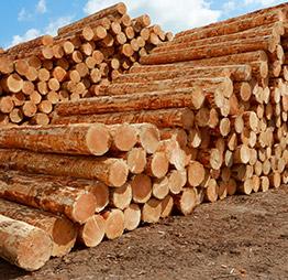 Notre passion du bois - Fargesbois